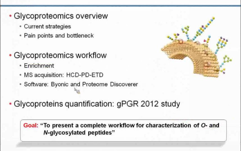 Maximize Glycopeptide and Glycoprotein Structural Information with LC/MS