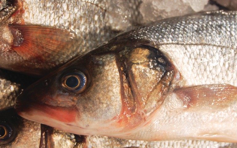 accurate-analysis-of-low-levels-of-mercury-in-fish-by-vapor-generation-aa