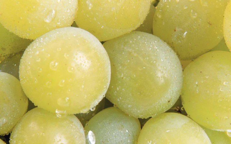 determination-of-pesticides-in-grapes-baby-food-and-wheat-flour-by-automated-online-sample-preparation-lc-msms