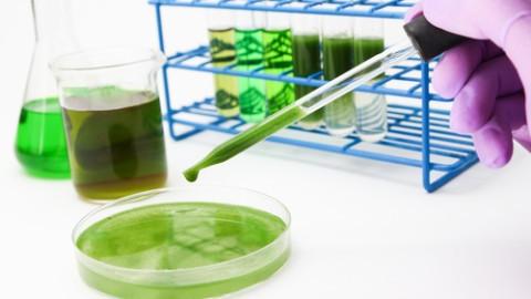 Algae-biofuel-research.jpg