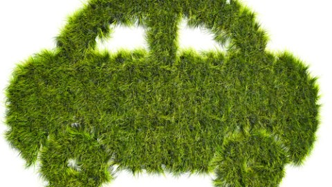 Car-shaped-grass-patch.jpg