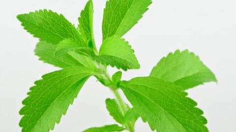Stevia-analysis.jpg