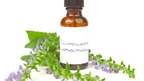 american-skullcap-herbal-medicine.jpg