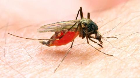 anopheles-mosquito.jpg