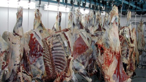 beef_carcasses-resized-600.jpg