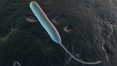 campylobacter-jejuni.jpg