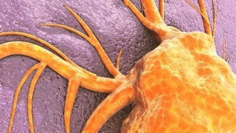 cancer-cell.jpg
