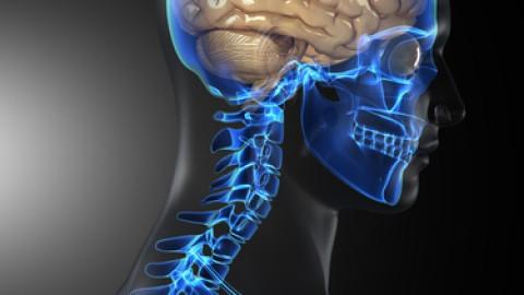 human-brain1.jpg