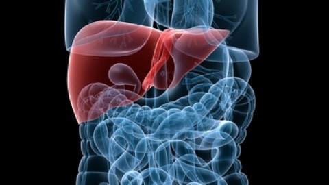 human-liver.jpg
