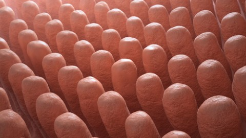 intestine-villa.jpg