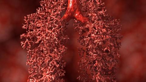 lung-alveoli.jpg