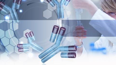 monoclonal-antibody-characterization-solutions.jpg
