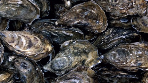 oysters-resized-600.jpg