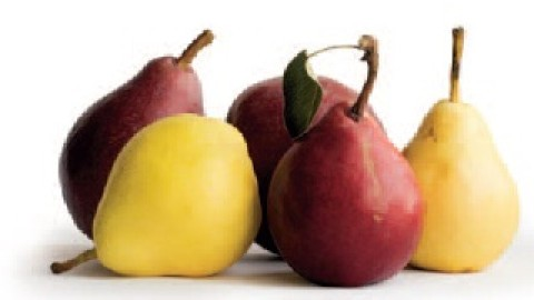 pear-resized-600.jpg