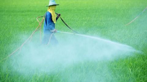 pesticide-spraying-3.jpg
