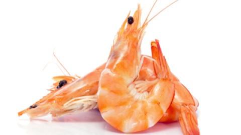 polyposphates-in-shrimp1.jpg