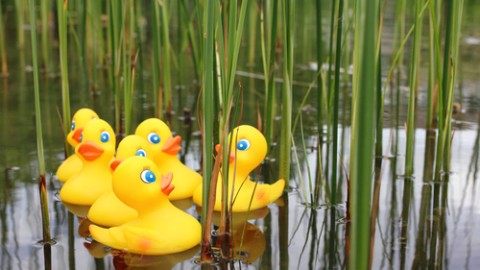 rubber-ducks-in-water.jpg