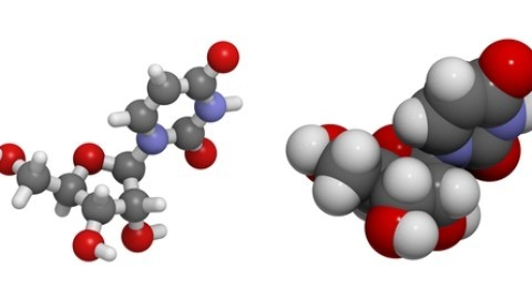 uridine-nucleoside-molecule.jpg