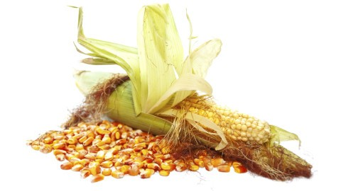 aflatoxin contamination in crops