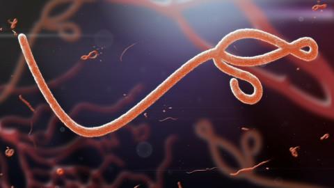 ebola virus (2)