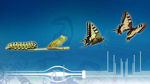 ProteomicsButterfly-1000x667