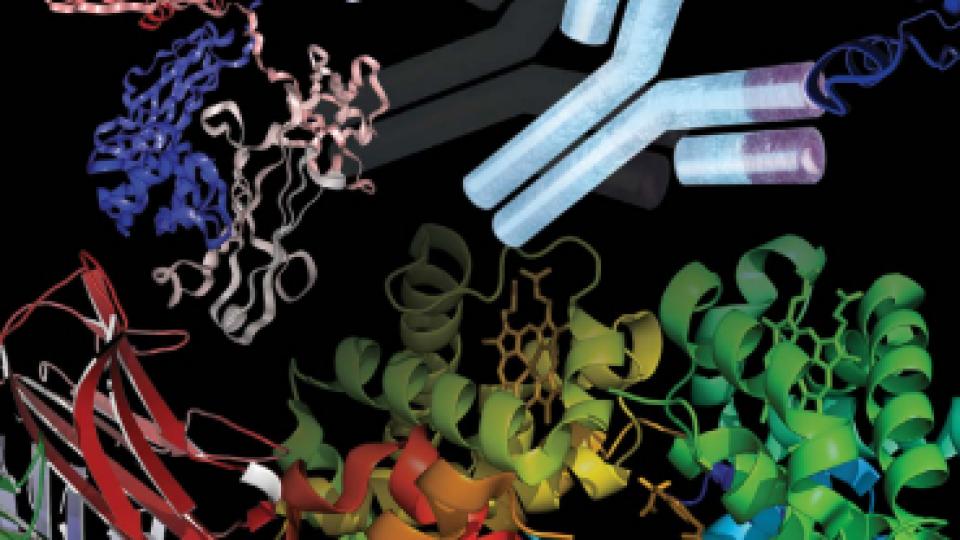 monoclonal-antibody-therapeutics