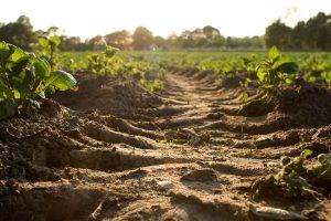 soil-farming-smart2pure-pro-blog